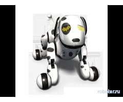 Зуммер собака-робот: все породы